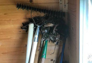 roodborstje tuinhuis nest