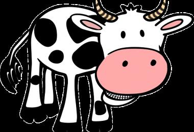 Koeienvla